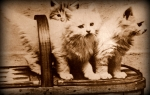 Old fashioned picture of kittens