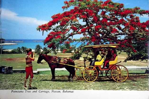 A horse and cart stand in front  of a flowering tree