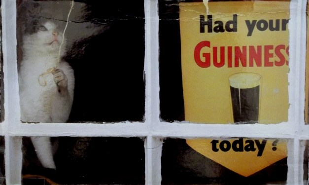 A cat pulls a blind shade by an ad for Guinness beer