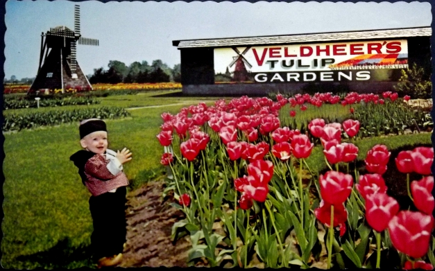 A small boy in Dutch attire stands in front of tulips