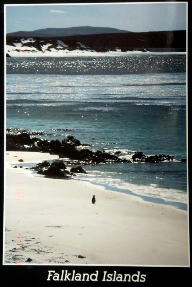 a penguin is on a rocky beach