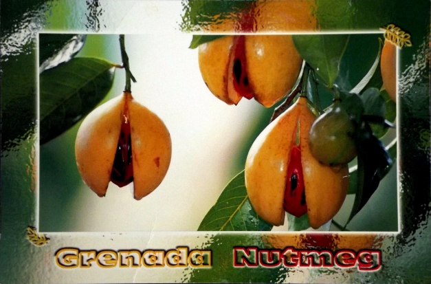 Image of nutmeg spices on a tree