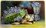 A kitten is hiding under a box of flowers