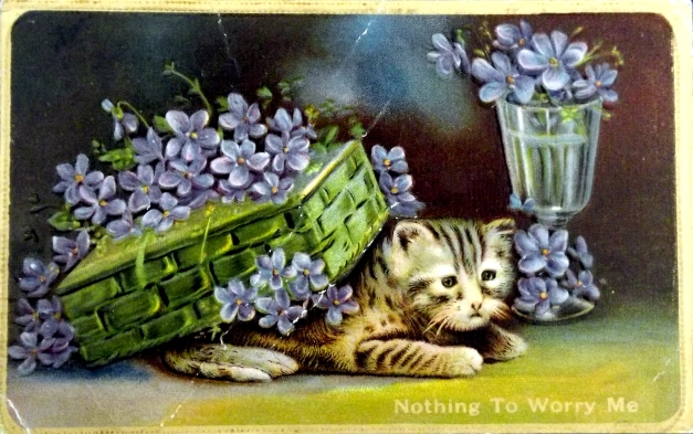 A kitten is hiding under a box of flowers