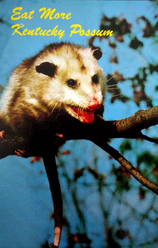 "Possum with the caption ""Eat More Possum"""