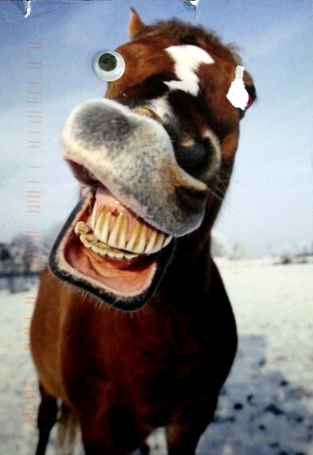 Image of a horse with a big grin and googly eyes