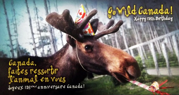 A moose is attired for some partying