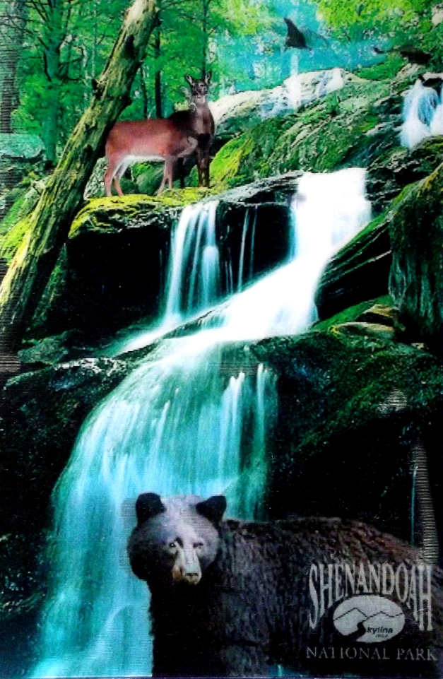 Deer and a bear pose behind a waterfall in the forest