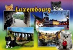 Kittens pose around various images of Luxembourg