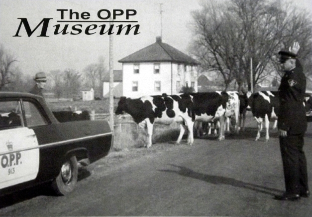 Old image of a police officer helping cows cross a street