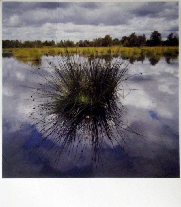 Postcard of a pond