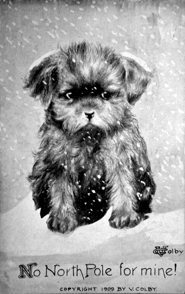 Picture of a cold dog in the snow