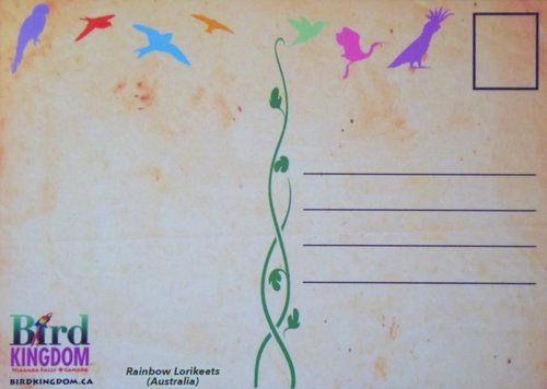 back of postcard - blank but with bird stencils