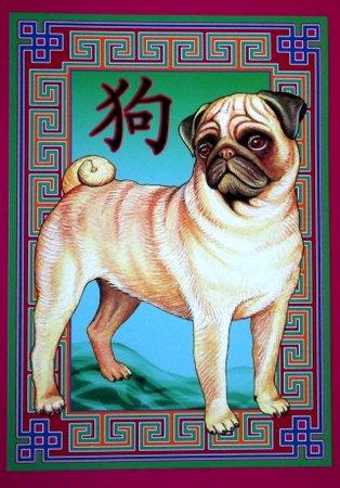 Illustration of a pug dog