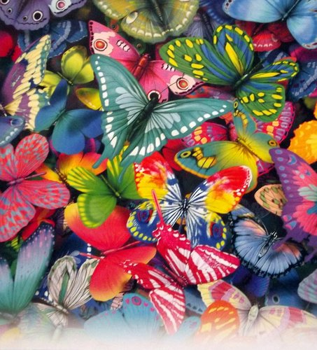 Images of various, multicoloured butterflies overlapping upon another