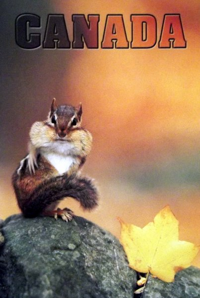 A plump chipmunk poses for the camera