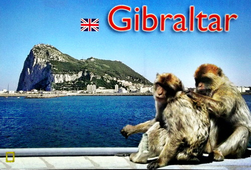 Two monkeys groom each other in front of the rock of Gibraltar