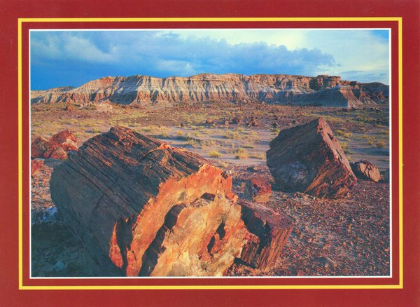 Images of petrified wood with desert scenery behind